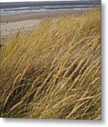 Dune Grass On The Oregon Coast Metal Print