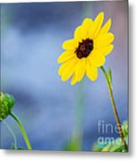 Dune Sunflower Metal Print