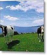 Durrus, Sheeps Head, Co Cork, Ireland Metal Print