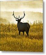 Dusky Elk Metal Print