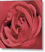 Dusty Rose Metal Print