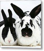 Dutch Rabbits Metal Print