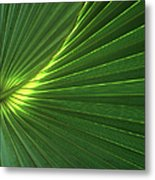 Dwarf Palmetto Leaves Metal Print
