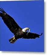 Eagle Fish In Mouth Metal Print