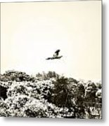 Eagle Flying Above The Forest Metal Print