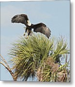 Eagle In The Palm Metal Print