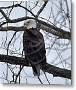 Eagle In The Wild Metal Print