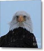 Eagle In The Wind Metal Print