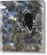 Eagle In Tree 2 Metal Print