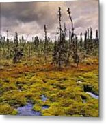 Eagle Plains, Yukon Territory, Canada Metal Print