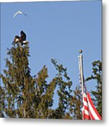 Eagle Rallies Round The Flagpole Metal Print