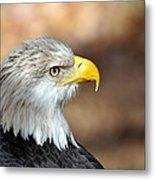 Eagle Right Metal Print