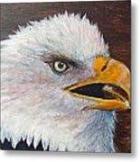 Eagle Study Metal Print