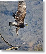 Eagle's Wings Metal Print