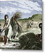 Early Humans Harvesting Crops Metal Print