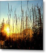 Early Morning In Maine Metal Print