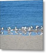 Early Morning Networking Metal Print