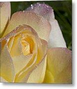 Early Morning Peace Rose Metal Print