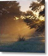 Early Morning Sun Beams Through Branches Of A Tree Metal Print by Heinrich van den Berg