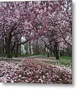 Early Spring Magnolias Metal Print