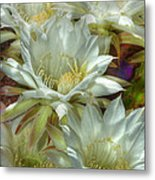 Easter Lily Cactus Bouquet Hdr Metal Print