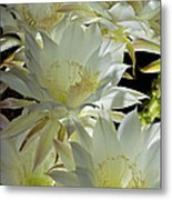 Easter Lily Cactus Bouquet Metal Print