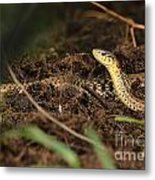 Eastern Garter Snake - Checkered Coloration Metal Print