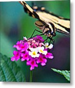Eastern Tiger Swallowtail 8 Metal Print