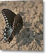 Eastern Tiger Swallowtail 8526 3205 Metal Print