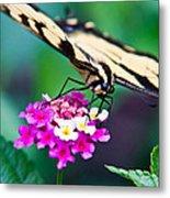 Eastern Tiger Swallowtail 9 Metal Print