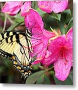 Eastern Tiger Swallowtail On Azalea Metal Print