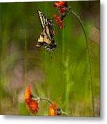 Eastern Tiger Swallowtail Profile Shot Metal Print