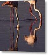 Eating Flamingos Metal Print