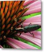 Echinacea Visitor Metal Print