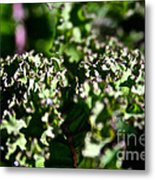 Edge Of Kale Metal Print