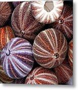 Edible Sea Urchin Souvenirs Metal Print