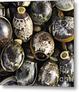 Eggs Of Stick Insect Metal Print