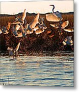 Egret And Ibis Party Metal Print