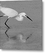 Egret In Black And White   Two Metal Print