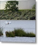 Egret Over Water Metal Print