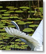 Egret Take Off Metal Print