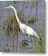 Egret Walking Metal Print