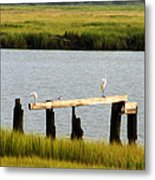 Egrets In The Salt Marsh Metal Print