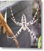Eight Legged Friend Metal Print