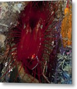 Electric Clam, Lembeh Strait, North Metal Print