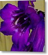 Elegance In Purple Metal Print