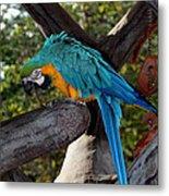 Elegant Parrot Metal Print