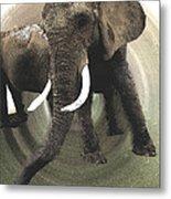 Elephant Awake Metal Print