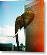 Elephant Box Metal Print