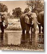 Elephant Bulls At Khwai River Metal Print